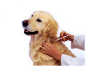 vaccines for dogs