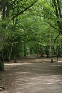 220px-HIGHGATE_WOOD