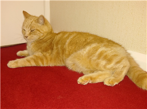 Friendly affectionate feline in need of a new home
