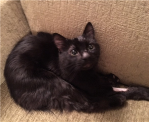 Young cat in need of a forever home
